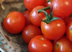 Tomatoes_SQ